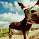 Donkey by SanMartin