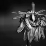 Melancholia by Bas